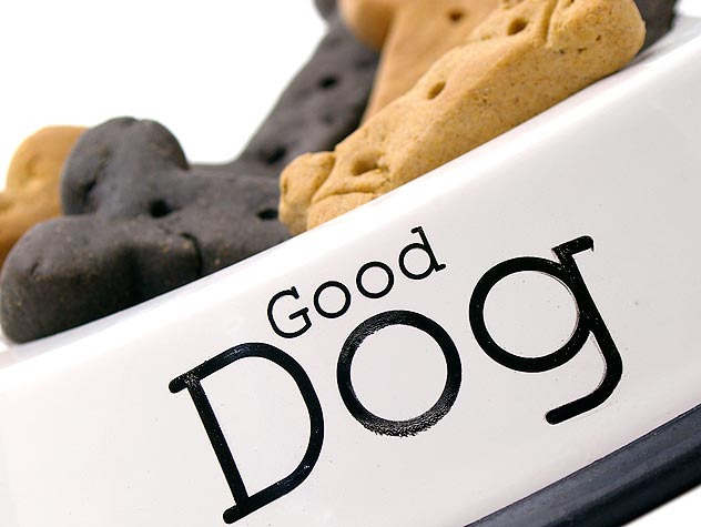 98004142-finding-the-right-dog-treats-632x475